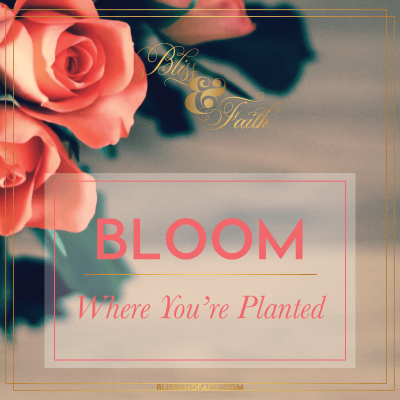 BloomPlanted